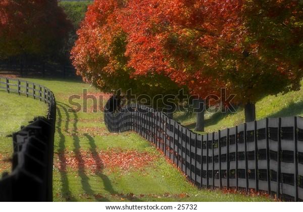 Shadows, colors and fences on a horsefarm in kentucky.