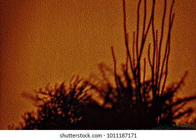 Shadows of desert plants and ocotillo on orange stucco wall