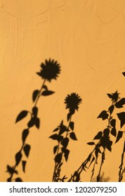 Shadows of flowers against yellow wall