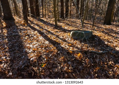 Shadows in the forest at golden hour after the leaves have fallen in the autumn