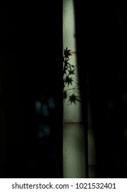 The shadows of leaves on the bamboo stems and the joints of bamboo shoots stretched straight up.