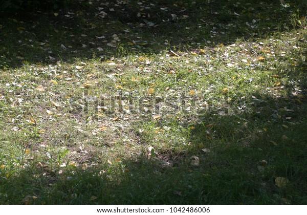 Shadows on the ground. Summer background