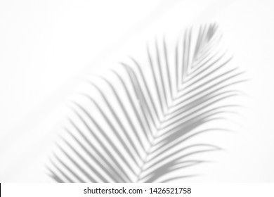 shadows palm leaf on white wall background. for creative design summer concept