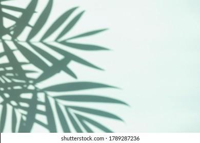 Ombres de feuilles de palme sur fond menthe. Copier l'espace.