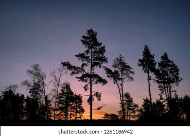 Shadows of tall fir trees on Blackheath, Surrey, during the colourful skies of morning sunrise.