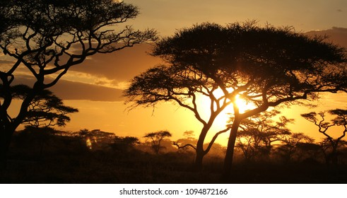 Shadows of trees in front of sunset on the African Savannah