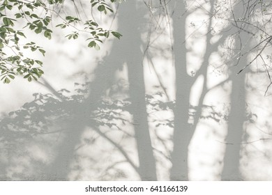 Shadows from trees on a plastered wall