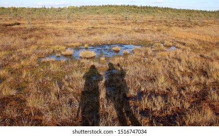 The shadows of two persons hiking on wetlands. The autumn weather is wonderful and the color of the plants is golden and red. The photo