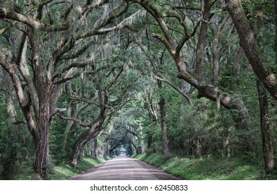 A shadowy dirt road through thick low country woods full of spanish moss. Both beautiful and spooky.