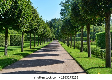 shady alley in a beautiful city Park between rows of evenly trimmed trees, hedges and flat lawns with green grass on a Sunny summer day