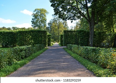 shady alley in a beautiful city Park between bushes, trees, hedges and evenly trimmed lawns with green grass on a Sunny summer day