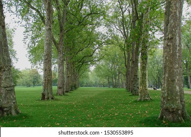 shady alley of plane trees in the old park, dry leaves in green grass, England