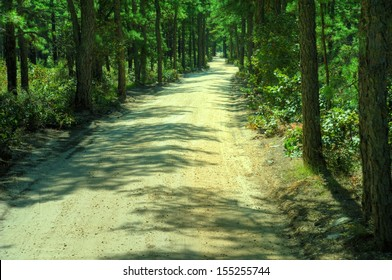 Shady Back Road through forest