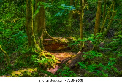 A shady enchanting scene found in the forest while hking in Forest Park, Portland, Oregon