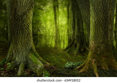 Shady forest landscape with old massive trees