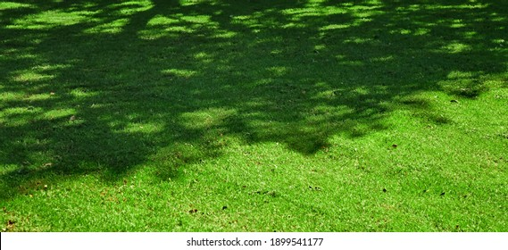 Shady Fresh Lawn Wide Background Or Texture. Garden Backyard Park Panoramic View. Abstract Meadow Banner. Lawn Made From Turf Or Sod. Focus Selective.