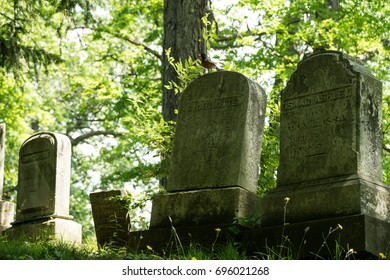 Shady grave stones in a forest with a Robin sitting on top