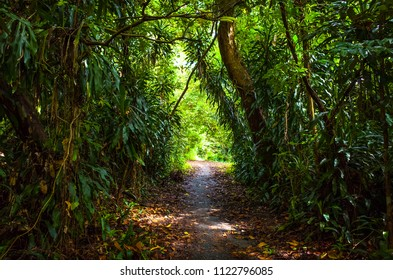 Shady natural archway on a lush jungle hiking trail in Bukit Timah, Singapore