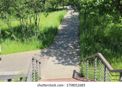 Shady paths of the Park. Summer in the Park