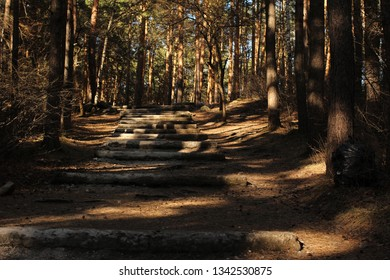 shady pine alley with stone steps