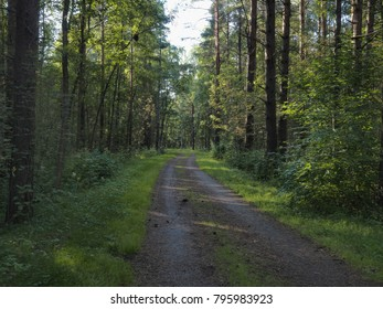 Shady road in forest