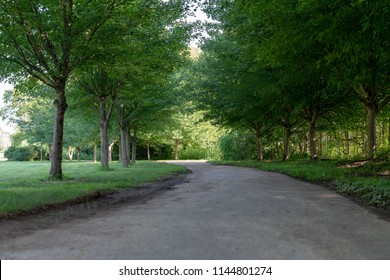Shady rural tree-lined road through a green park or fields with leafy green trees in a scenic landscape