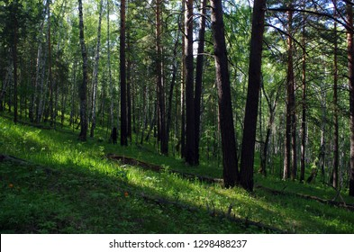 Shady spring forest on the mountainside.