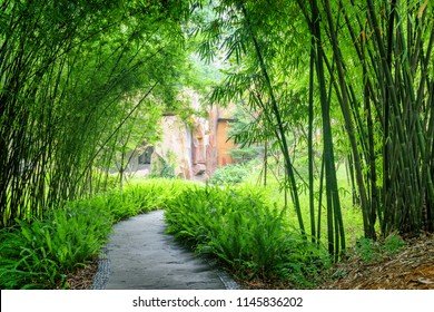 Shady stone walkway among ferns and green bamboo trees in park.