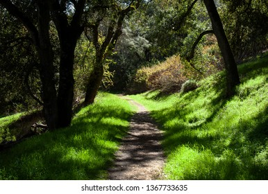 Shady Trail in Spring