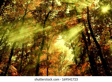 Shafts of light through forest trees.