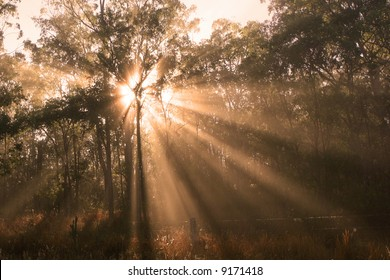 Shafts of Sunlight