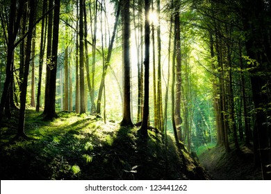 shafts of sunlight in a drak forest