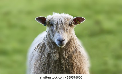 Sheep Wool Images Stock Photos Amp Vectors Shutterstock