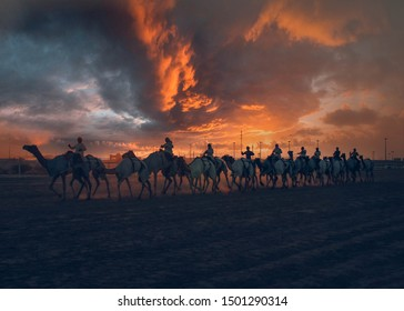 Shahania, Qatar - October 21, 2017: Camel Racing Track while sunset. Silhouette Camel trail