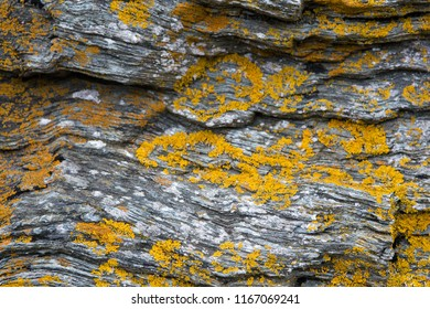 Shale stone wall with yellow moss spots. North Wales coast.