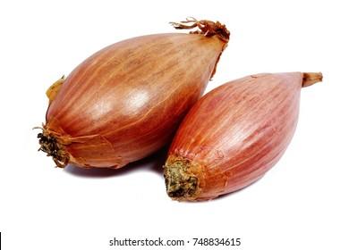 shallot onion (Allium ascalonicum)