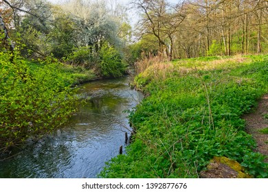The shallow, clear, River Leen winds through woodland on a bright spring morning.