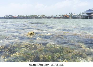 Shallow coral reef at Mabul Island, sabah, Malaysia