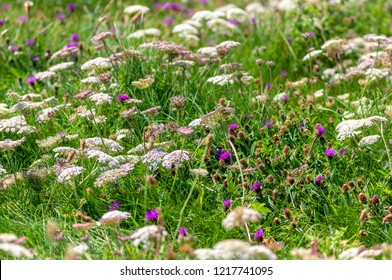 Shallow depth of field focuses on a mixture of wildflowers amongst grasses in a downland setting