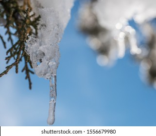 Shallow Depth of Field Macro of Ice Hanging From a Snow Covered Juniper Branch