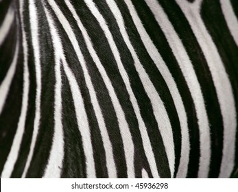 shallow depth of field view of zebra stripes