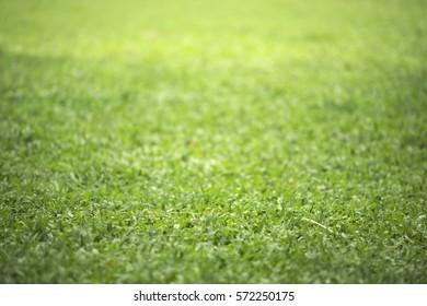 Shallow DOF of plain green grass background