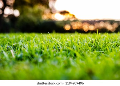 Shallow focus image of a well-maintained garden showing detail of the lush lawn seen from just above its surface. The background shows a distant sunset behind out of focuses hedges.