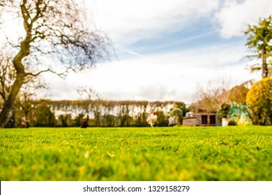 Shallow focus of a recently cut lawn seen in a large and well maintained garden. The lawn has recently been fertilised, prior to its first springtime cut. Chickens can also be seen in the distance.