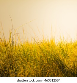 Shallow focus at sunset on grass on the African savanna