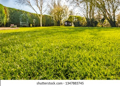Shallow focus view of a well-maintained garden lawn seen from ground level. The distance shows a variety of trees and a large hedge in the distance.