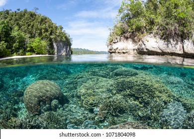 A shallow, healthy coral reef grows in Raja Ampat. This tropical region is known as the heart of the Coral Triangle due to its marine biodiversity.
