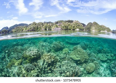 A shallow, healthy coral reef thrives near limestone islands in Misool, Raja Ampat, Indonesia. This tropical region is known as the heart of the Coral Triangle due to its marine biodiversity.