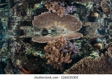 """Shallow, healthy corals are reflected in the smooth surface of the ocean in Raja Ampat, Indonesia. This biodiverse region is known as the """"heart of the Coral Triangle"""" due to its amazing marine life."""