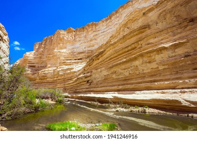 The shallow lake in the canyon is overgrown with grass. Israel. The gorge Ein Avdat is formed by the Qing River in the Negev desert. The concept of active and photo tourism